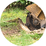 Land Clearing Services Stump Removal