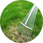 Spring Fall Cleanups Dethatching